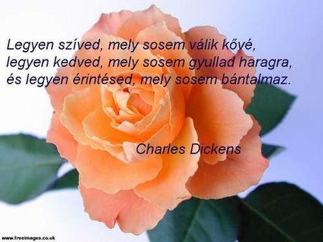Rózsába írt.idézet