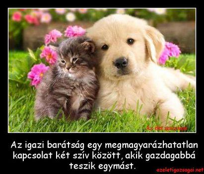 Az-igazi-barátság