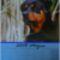 Rottweiler_majus_2069114_5286_s