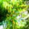 Sarga_akac_2069200_8882_s