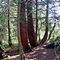 Alcsútdoboz Arborétum 025_edited