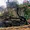 Alcsútdoboz Arborétum 030_edited