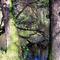 Alcsútdoboz Arborétum 034_edited