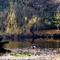 Alcsútdoboz Arborétum 038_edited