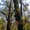 Alcsútdoboz Arborétum 040_edited