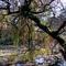 Alcsútdoboz Arborétum 047_edited