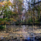 Alcsútdoboz Arborétum 048_edited