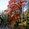 Alcsútdoboz Arborétum 049_edited