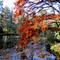 Alcsútdoboz Arborétum 050_edited