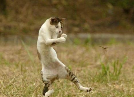 Cica és a szitakötő