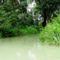 Nyárasi szigeti alsó vizes élőhely fok, Dunasziget 2016. július 14.-én  1