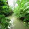 Nyárasi szigeti alsó vizes élőhely fok, Dunasziget 2016. július 14.-én  5