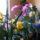 Orchideak-001_206917_57798_t
