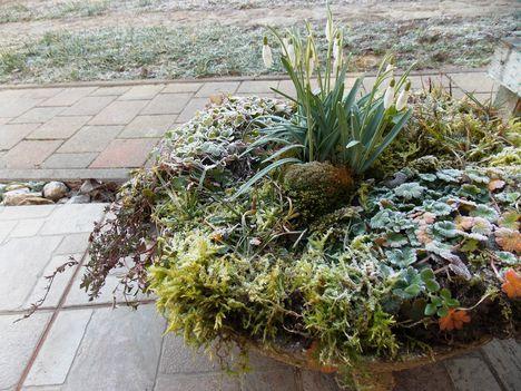 Tavasz a télben, cserépben.