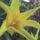 Tulipant_206962_61042_t