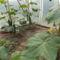 Hidegfolias_uborka_2071865_8003_s