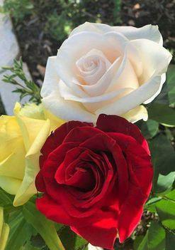Csodás szép napot kívánok.
