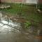 eső után 2009.06