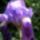 Fotoim_7_272656_35302_t