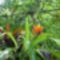 Amazonas_1_2073663_8902_s