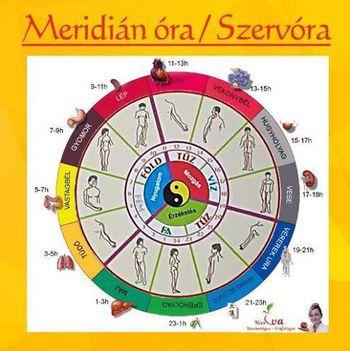 Szerv-óra