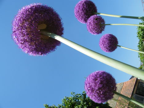 virágaim 2