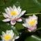 virágaim 8