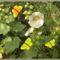 Bio kert,permetezés nélkül! 2