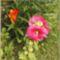 Bio kert,permetezés nélkül! 3