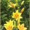 Bio kert,permetezés nélkül! 5