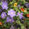 Bio kert,permetezés nélkül! 6
