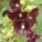 Bio kert,permetezés nélkül! 8