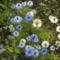 Bio kert,permetezés nélkül! 9