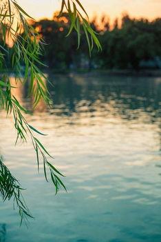 Fecske Csaba - Aranyat rejt a nyár