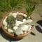 Kaktusz tál!