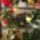 Begonia_gyujtemeny_278040_61524_t