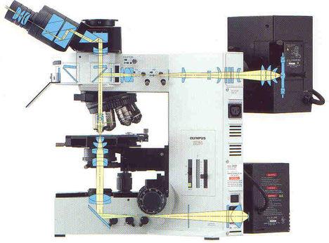 fluoreszcens mikroszkóp