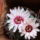 Kaktuszaim-001_278037_98337_t
