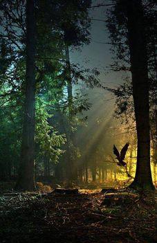 Magas fenyőfa tetején..Dáma Lovag Erdős Anna verse.
