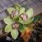 orchideák sisal tölcsérben (saját muka)