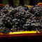 Otelló szőlő