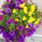Viragaim_1-010_2078789_5163_s