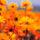 Garden_279829_10608_t