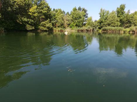Helenai tavak a tározótér belső területén, Dunakiliti 2018. július 20.-án