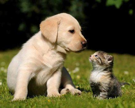 Aranyosi Ervin: A barátság szeretet-nyelve