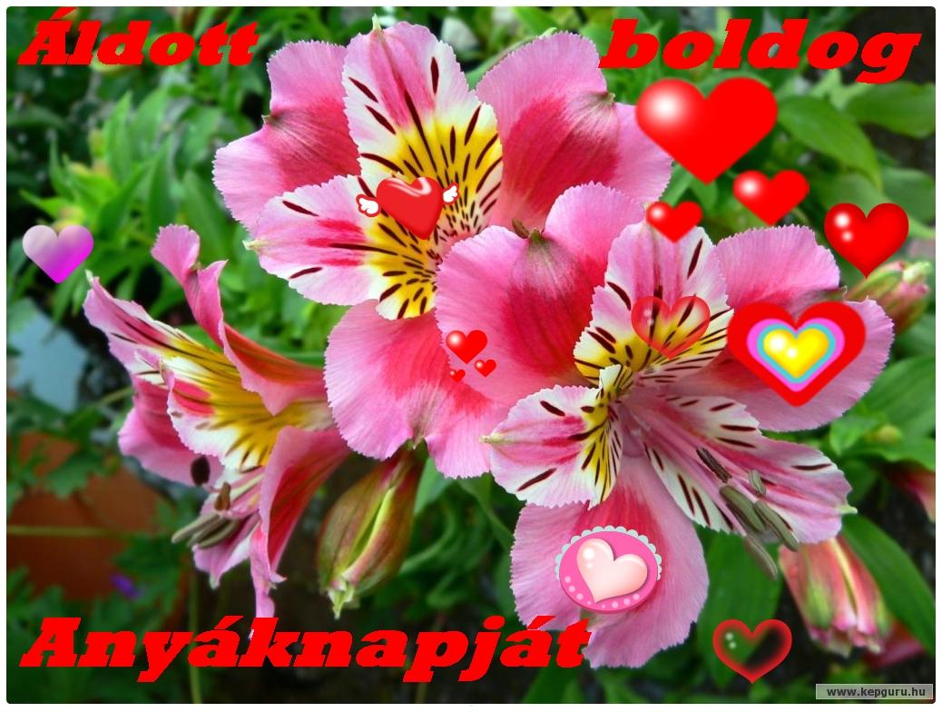 Цветок дружбы картинка 4
