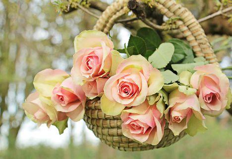 rózsák 5