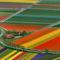 Tulipánmezők Amszterdam közelében - Hollandia