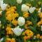 Tulipánok és kankalinok