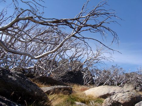 Kosciuszko National Park 26